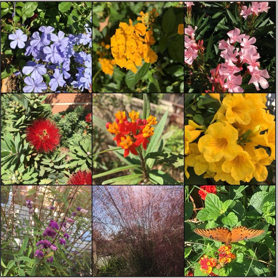 Gardening-Volunteer-PTSA