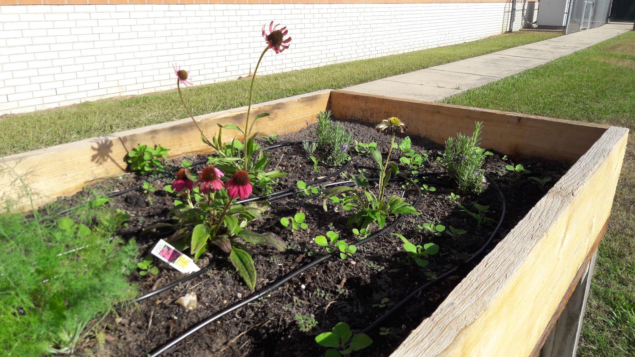 Volunteer-Garden